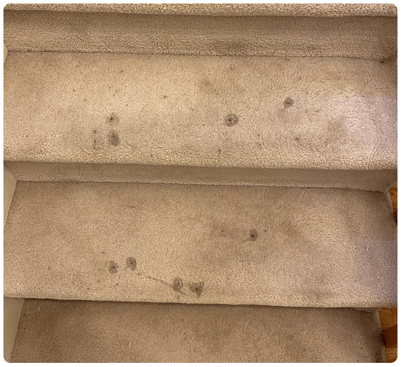Carpet Cleaning Lenah Valley